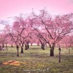 Kirschblüte Schlosspark Schwetzingen - Sebastian Maier © 2016