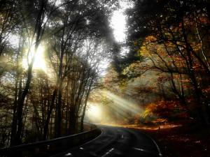 Herbstlicht 1, 2015