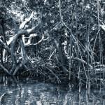 Mangrove 1 - Sebastian Maier, 2016