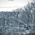 Forest - Sebastian Maier © 2016