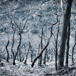 Unterholz - Sebastian Maier © 2016